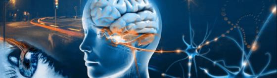 cropped-cropped-eye-brain-photo-neuropsych-workshop13.png
